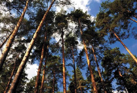ВКировской области нелегально вырубили лес на13 млн. руб.